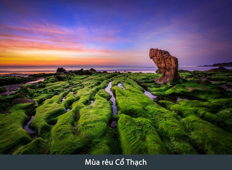 vietnam, moss, sunrise, dawn, seascape Moss at dawnphoto preview