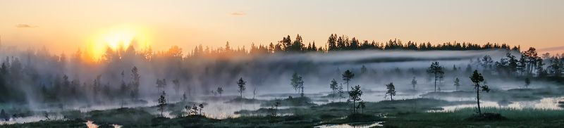 карелия, север, панорама, лето, болото, рассвет, восход, утро, туман, ***photo preview