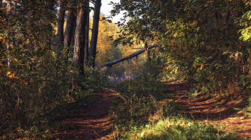 осень, утро, Утро в осеннем лесуphoto preview
