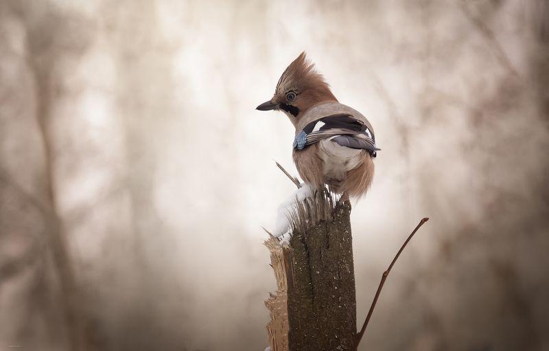 природа, лес, животные, птицы Красотуляphoto preview