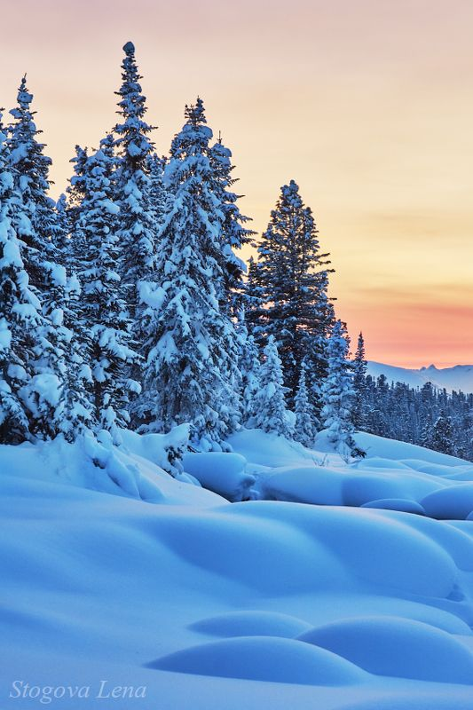красноярск, ергаки, закат Снежный лесphoto preview