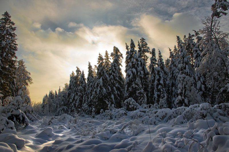 снег, зима, ели, вечер Противостояние.photo preview