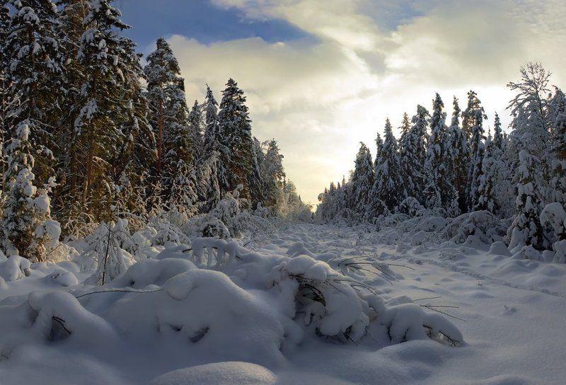 Зима в Мещереphoto preview
