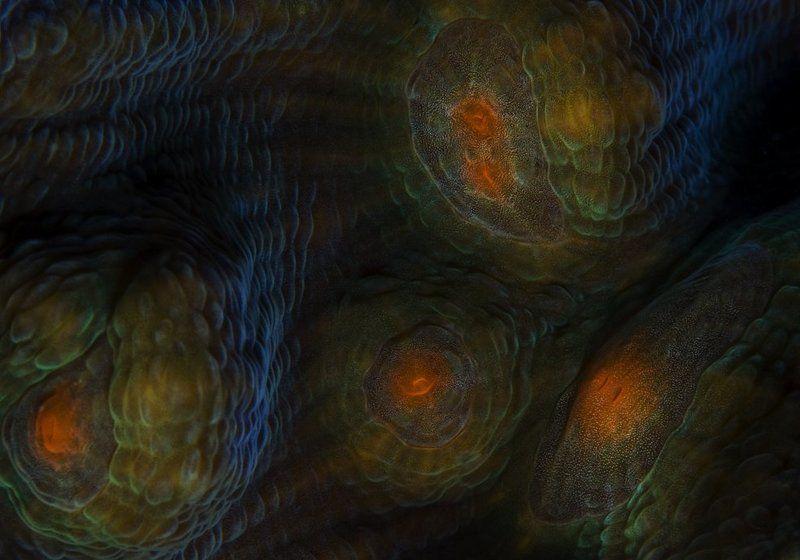 красное, море Галактикиphoto preview