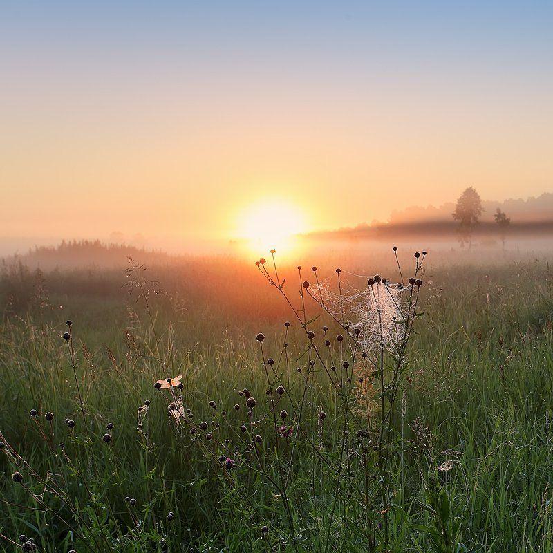 пейзаж, природа, утро, роса, рассвет, солнце На рассвете...photo preview