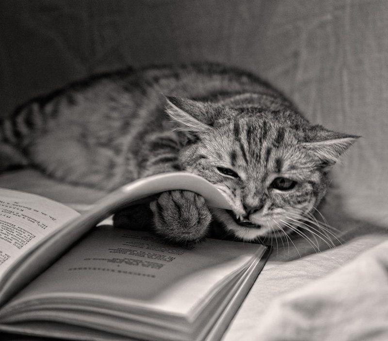 лирика, кошка, книга, стихи Лирикаphoto preview