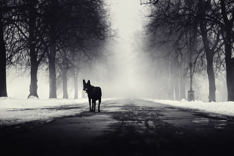 dog, fog, dmitry,alekseyev, bw, toned, road, park Follow me IIphoto preview