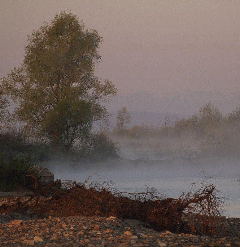 утро, весна, туман \
