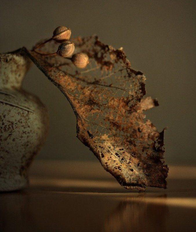 Осенний профильphoto preview