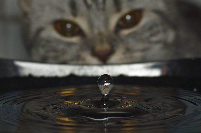 кошка, глаза, вода, капля Помощницаphoto preview
