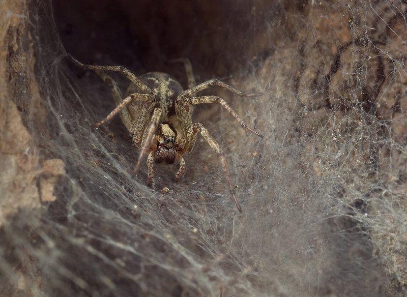 паук, макро, логово, шелоб, micro-nikkor af 105mm f/2.8 d, nikon d80 Логово Шелобphoto preview