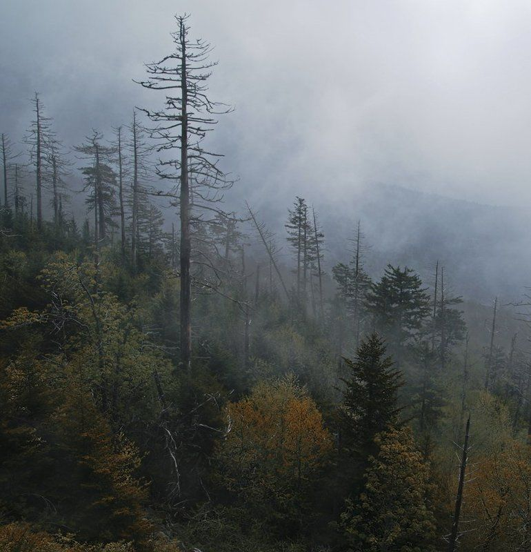 утро, туман, горы, деревья, пейзаж, природа, облака Туманное утро в горахphoto preview