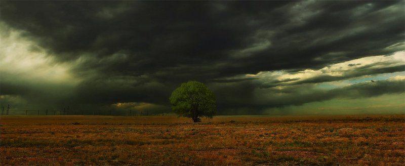 дерево,тучи в одиночествеphoto preview