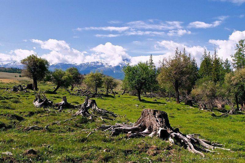 ok-photo, oleg kulakov, олег кулаков, июнь, на северо-чуйском, горы, алтай, , горный алтай photo preview