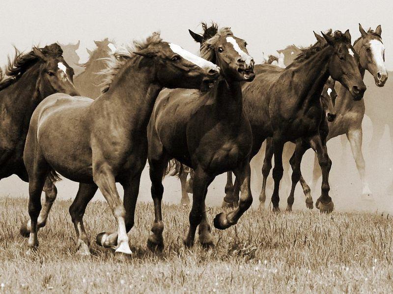 лошади Сбежим?!photo preview