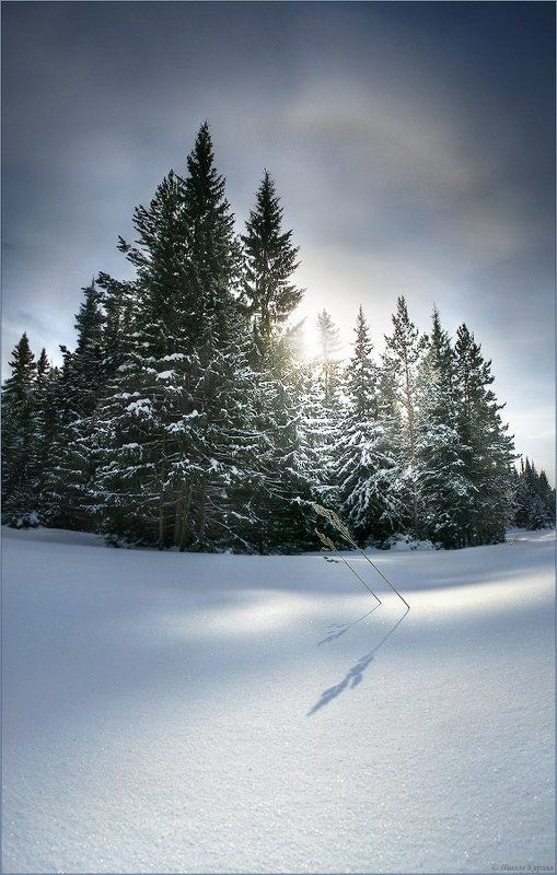 весна, зима Весенний светphoto preview