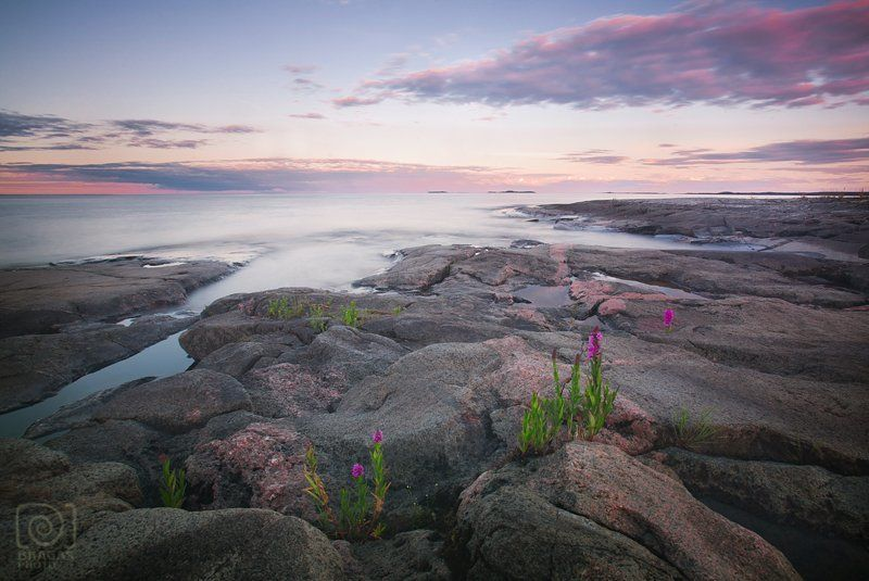 ладога, ладожское, озеро, карелия, пейзаж, камни, цветы, берег, небо, закат photo preview