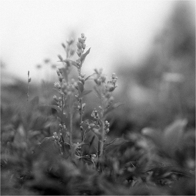иремель, цветы Цветы Иремеляphoto preview