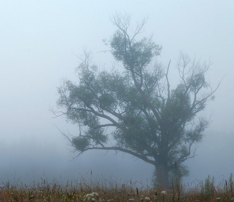 ива, туман Старая Иваphoto preview