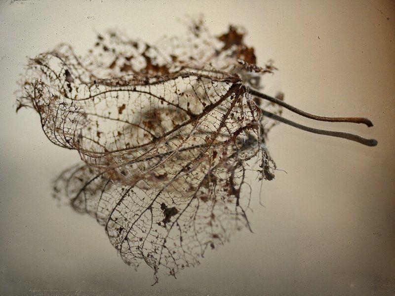 Осенний следphoto preview
