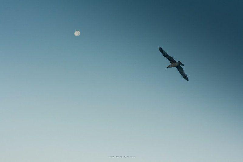 Albatrossphoto preview