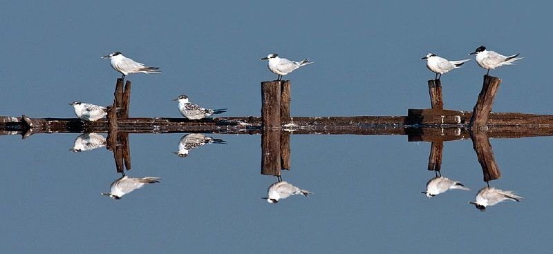 птицы, зеркало, вода 4+2=12photo preview