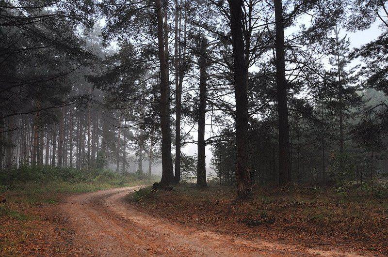 В лесу...photo preview