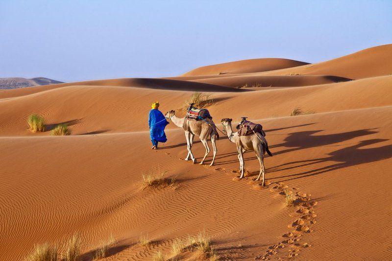 сахара, sahara, desert, sand, camel Сахараphoto preview
