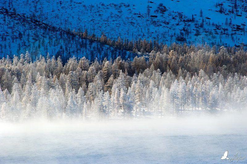 магадан, атка, зима, мороз, озеро, иней, лес, гранд Морозное утроphoto preview