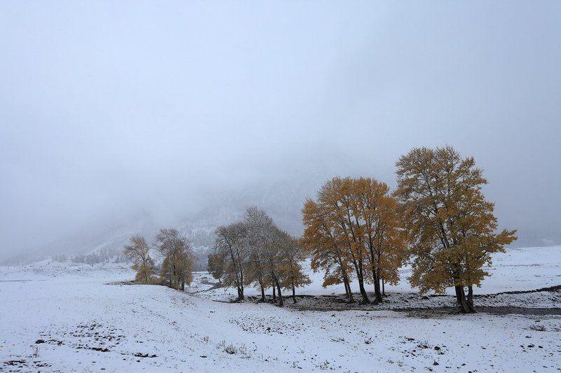 пейзаж, природа, алтай, осень, снег, метель, горы Сентябрьская метельphoto preview