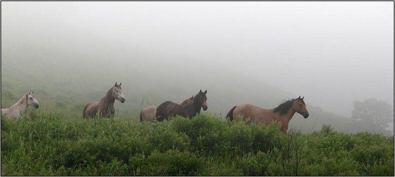 ходят кони над рекою..photo preview