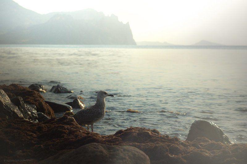 птица, черное море, берег моря, горы photo preview
