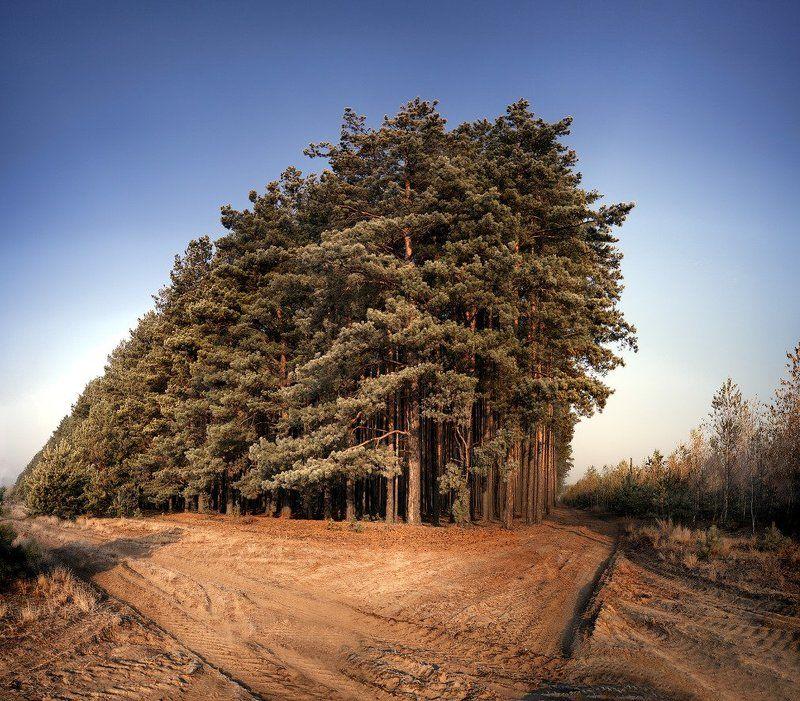 лес, полесье Полесский Титаникphoto preview