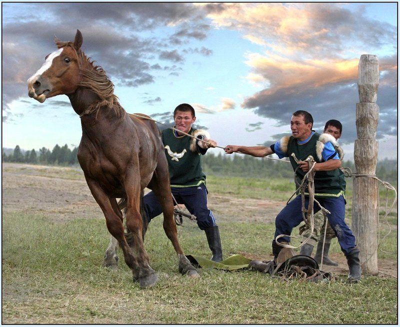 горный алтай, эл-ойын, лошади Эл-Ойын.photo preview