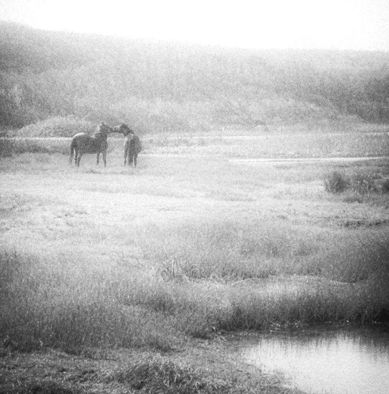 лошади ***photo preview