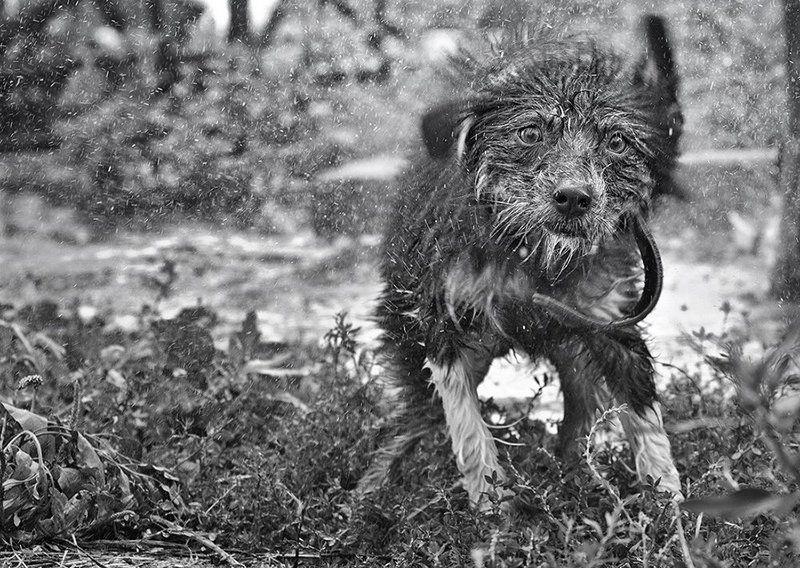 Не собачье это дело - душ принимать!photo preview
