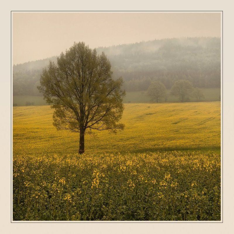 пейзаж lonely tree in a yellow fieldphoto preview