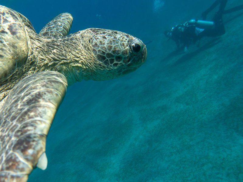 Черепахи Абу Дабаб, Марса Алам, Египетphoto preview