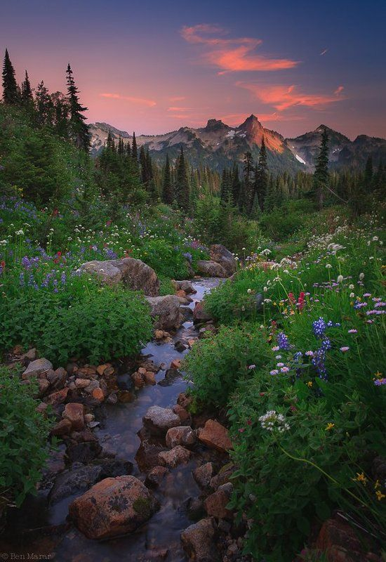 mt. rainier np, paradise. Evening Walk in Paradise or What a Wonderful World...photo preview
