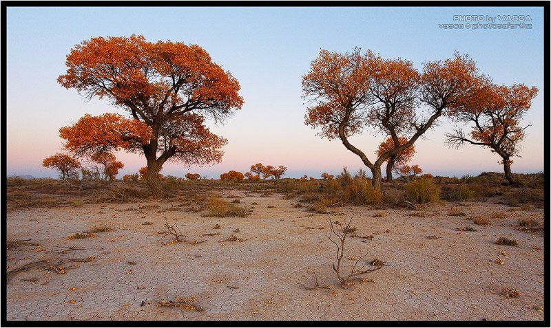 photo, safari, kazakhstan, nature, season, казахстан, природа Времена Годаphoto preview