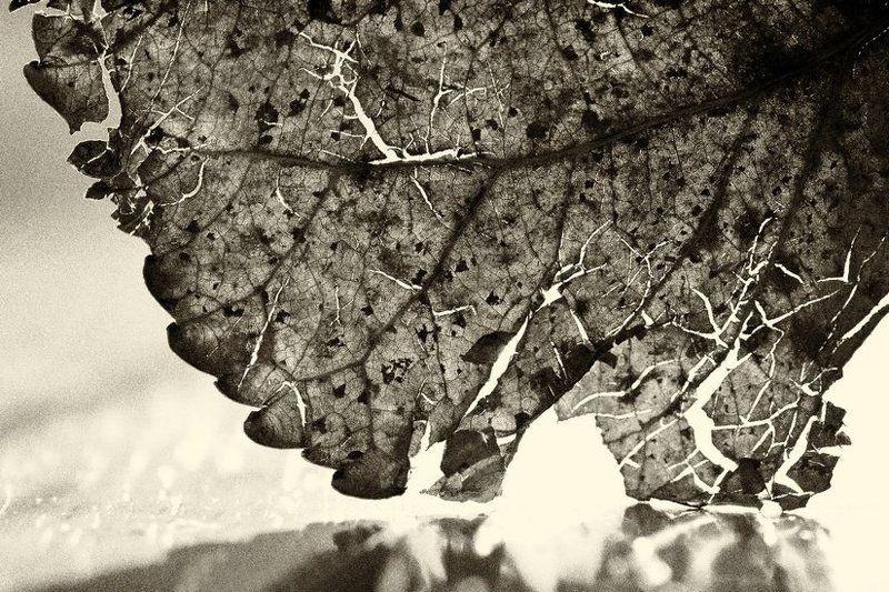 Улетели листья с тополей...photo preview