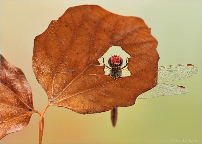 стрекоза Окно в осеньphoto preview