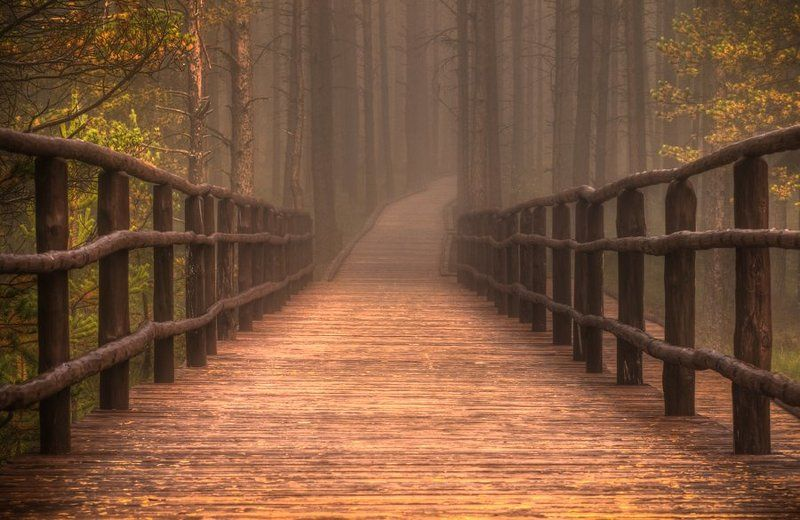landscape,forest,footbridge,path,poland,путь,дорога,лес,пейзаж Homesicknessphoto preview