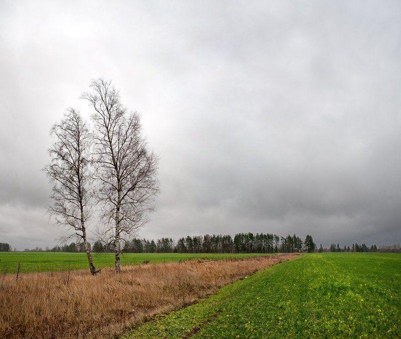 осень, в, полях... Осень в полях...photo preview