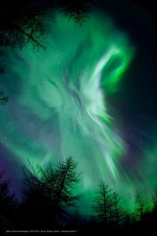 пейзаж, природа, природное явление, россия, север, якутия, айхал, время года, зима, ночь, тайга, деревья, небо, космос, свет, северное сияние, поля Северное Сияние в Якутии ! - 2photo preview