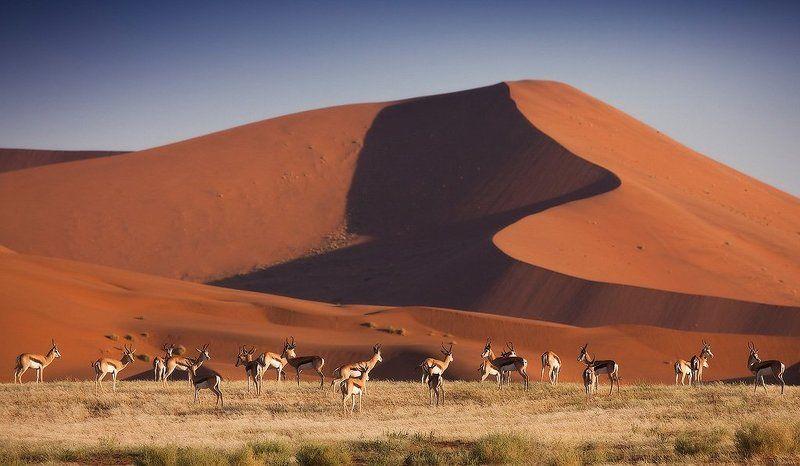 намибия, пустыня намиб Намибия. Пустыня Намибphoto preview