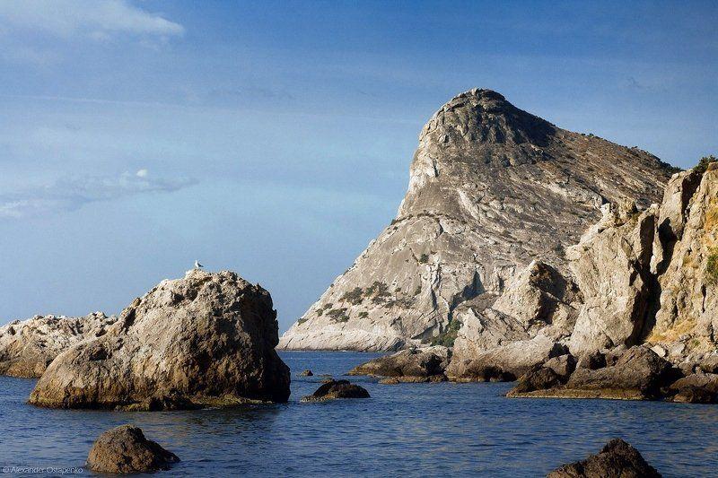 новый свет, крым, чайка, горы, море, берег, природа, коба кая Новый Свет. Утро. Коба-Каяphoto preview