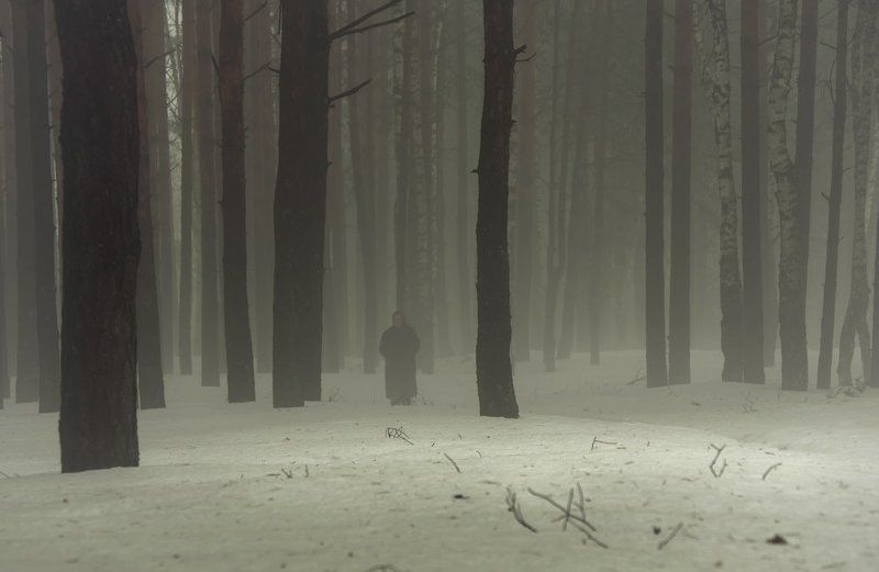 весна, туман, сосны Пешая прогулка по сосновому лесу.photo preview