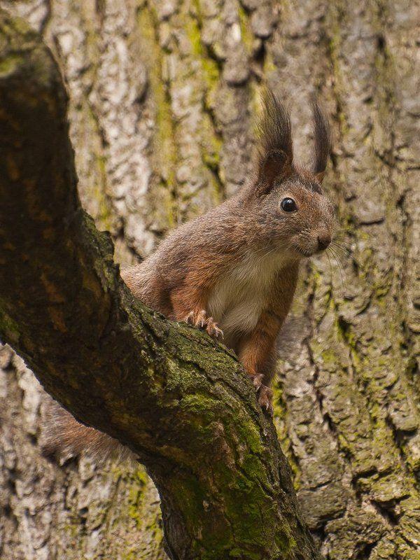 animals,nature,squirrel Obserwatorphoto preview