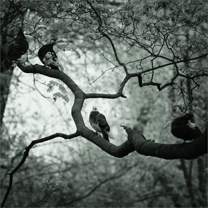 ветка, голуби на веткеphoto preview